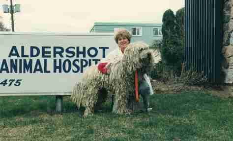 00 - Burlington · Eva Dusil (Veterinarian, Aldershot Animal Hospital, Komondor)