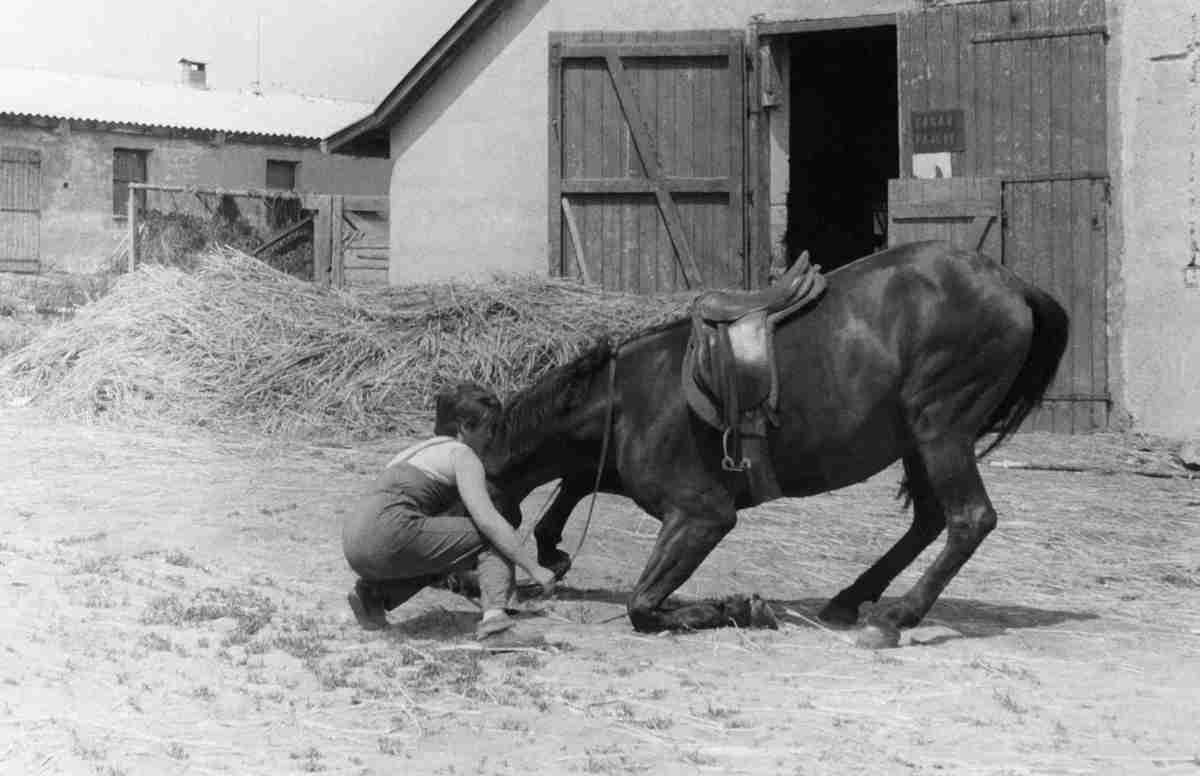Family • Photo Restoration • 54 • Mamička • Horses
