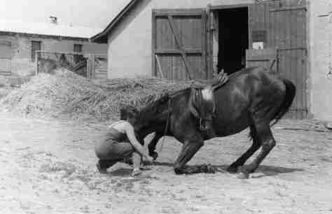 61.Jul - Barca · Eva Kendeova (braking horses, teaching to kneel, Jednotné rolnícke družstvo)